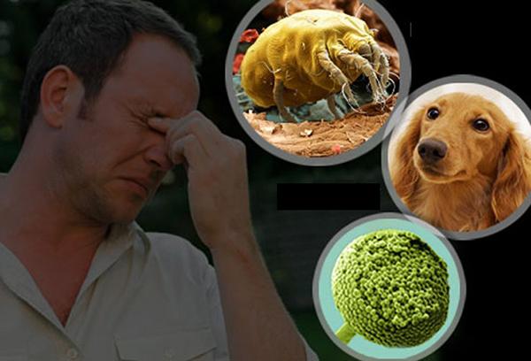 Nguyên nhân và triệu chứng viêm mũi dị ứng