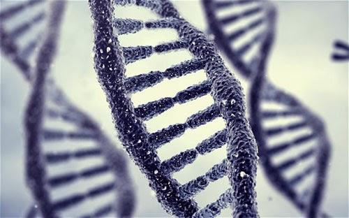 Di truyền có thể là tác nhân gây ra các bệnh hô hấp, tai mũi họng, viêm xoang
