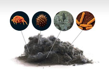Các yếu tố kích ứng trong môi trường sống như bụi bẩn, mạt nhà, lông động vật,... có thể gây viêm mũi dị ứng
