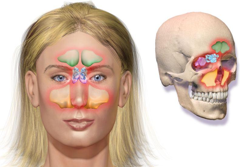 Vị trí của xoang trán nằm phía trên hốc mắt, ngang lông mày và hơi chếch về phía trên trán