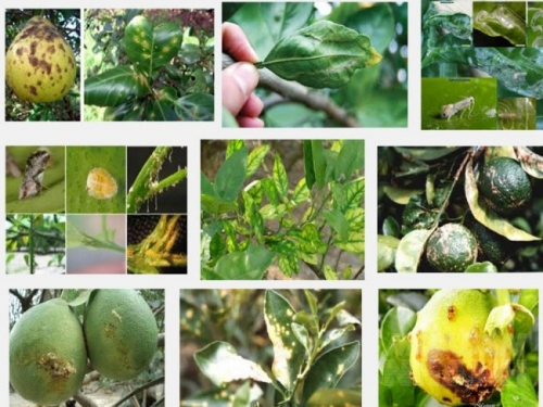 Các loại cây trồng, ngũ cốc dễ bị vi nấm tấn công, thường xuyên tiếp xúc với ngũ cốc dễ mắc viêm xoang do nấm