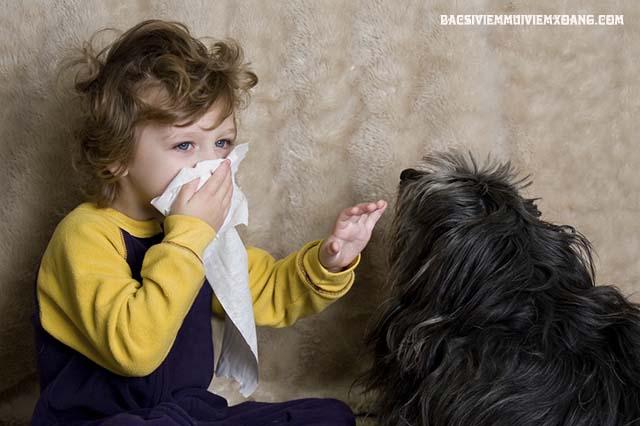 Chữa viêm mũi dị ứng mãn tính bằng cách tránh xa lông động vật