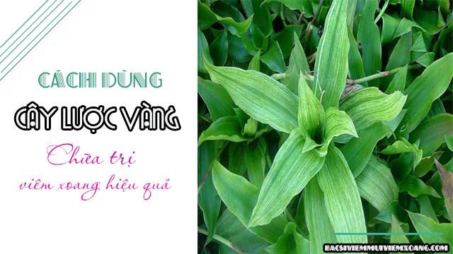 Cách chữa viêm xoang hiệu quả bằng cây lược vàng