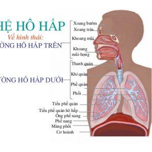 Kết quả hình ảnh cho bệnh viêm đường hô hấp trên