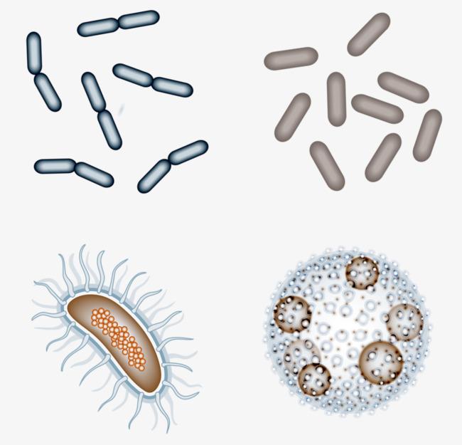 Nhiễm các loại vi khuẩn, virus, nấm từ môi trường bên ngoài có thể gây viêm xoang cấp