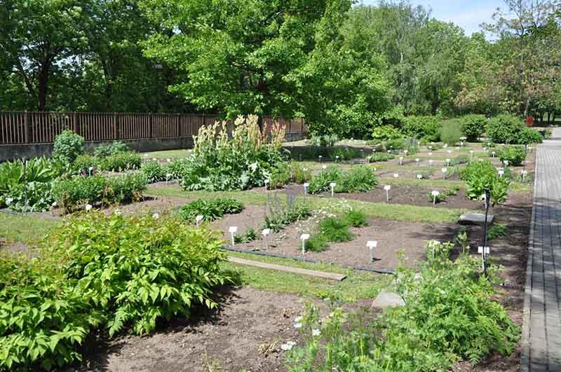 Các thảo dược đều đến từ vườn thảo dược sạch đạt tiêu chuẩn GACP - WHO