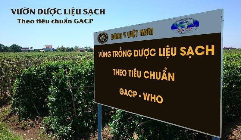 Vườn thảo dược đạt tiêu chuẩn GACP - WHO